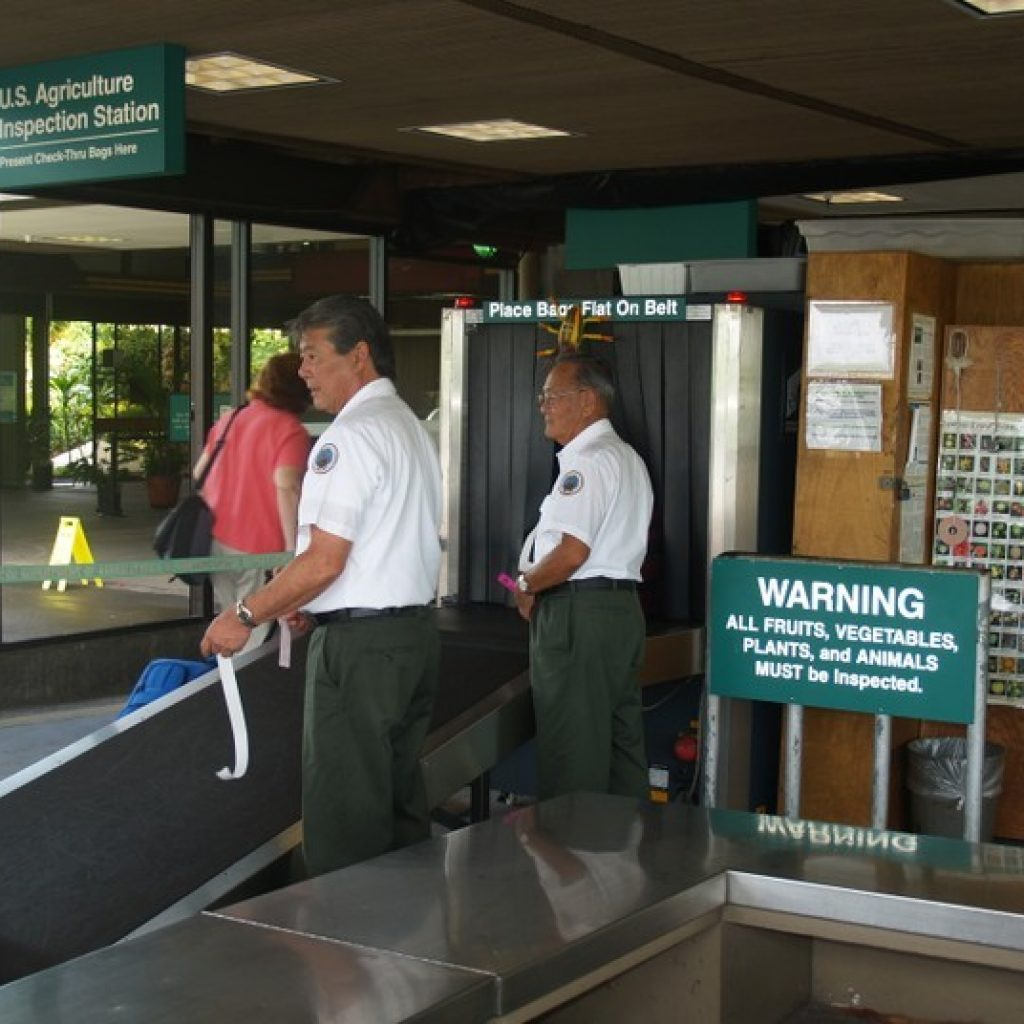 Honolulu Airport Agriculture Inspection